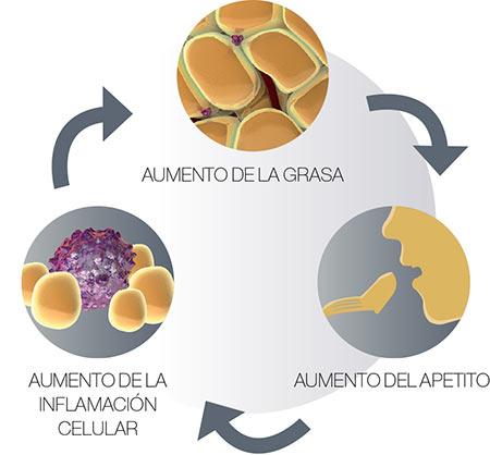 circulo vicioso lipoinflamacion